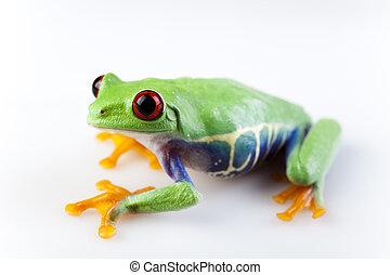 Animal, funny bright tone concept