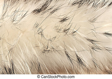 Animal fur texture background