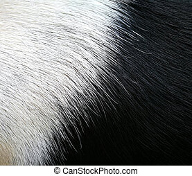 Animal Fur Texture black and white color.