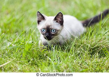 animal, gato