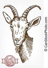 animal, grazing., livestock., dessiné, chèvre, head., main., croquis