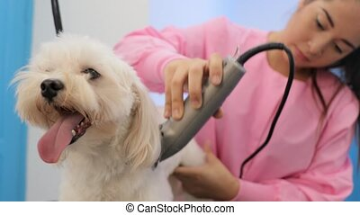 Animal Health And Hygiene For Clean Dog In Pet Shop - Young...