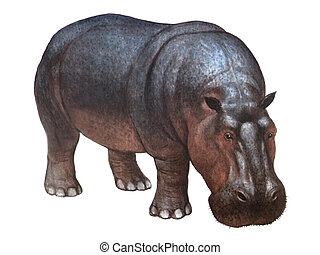 Animal Hippopotamus - Colored drawing on the paper animal...