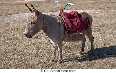 Animal house. The young burro costs on a glade