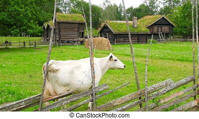 """animal husbandry livestock breeding, norwagian village,..."
