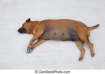 the brown dog sleeping on cement ground