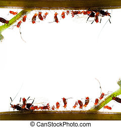 insect aphid family - animal macro tiny insect aphid family