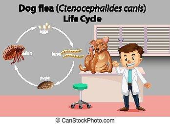 animal, malade, vétérinaire