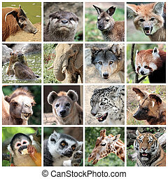Animal mammals collage - Animals collage with potamochoerus,...