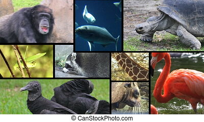 Animal Montage 2 - Four compositions of animal shots,...