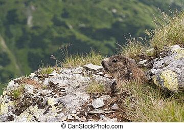 Animal Mountains High