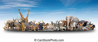 animal of the world with blue sky