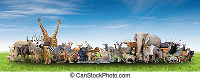 animal of the world with fresh green grass and blue sky