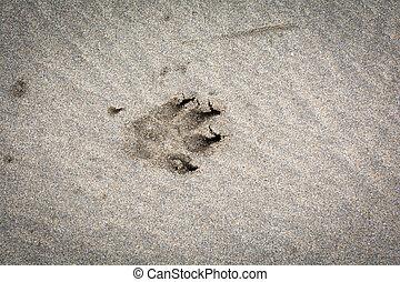 Animal, paw print on a sandy beach