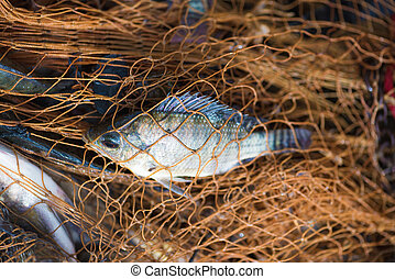 animal., peixe, pesca, net.