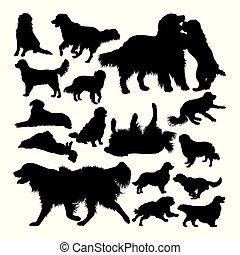 animal, perro cobrador, silhouettes., dorado, perro