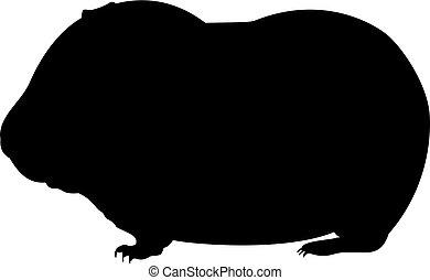 animal., pig., poco, guinea, silueta, lindo, joven