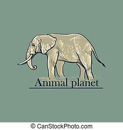 Animal planet Logo Symbol For Your Design