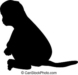 animal., poco, monkey., silueta, lindo, joven