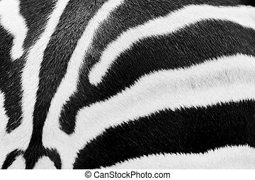 Animal print, zebra texture seamless background black and