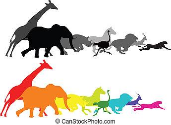 Animal racing - Vector illustration of wild animal running