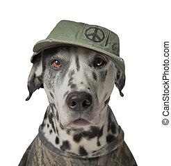 Green peace activist, acting dalmatian