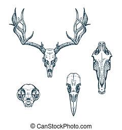 Animal Scull Set Deer Horse Cat Crow - Animal skulls set...