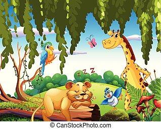 animal selvagem, natureza