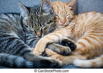 cats - animal series: sweet small fluffy cats dream