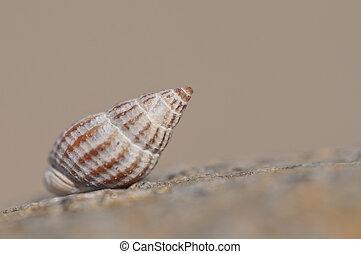 animal shell on the beach