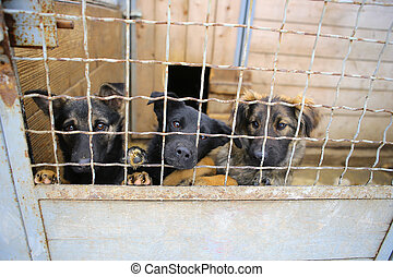 Animal shelter.Boarding home for dogs