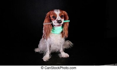 Animal sick pet dog vet veterinarian veterinary flu concept...