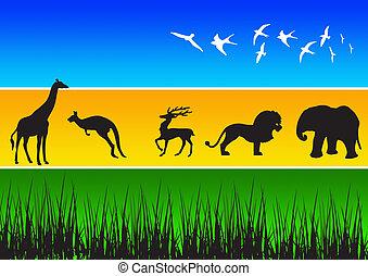 animal, siluetas, 4