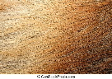 Animal skin - Background of brown fur on animal skin. Light ...