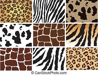 animal skin - vector skin of animals