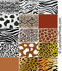Animal skins - Illustation of different animals and snakes ...