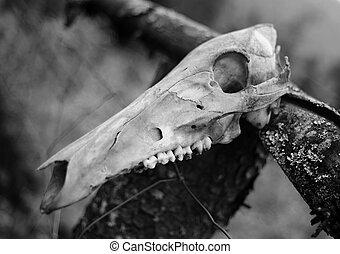 Animal skull - black - white