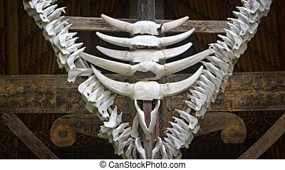 Skulls, horns and jaw bones of cattle are mounted as decorations at the entrance of a traditional, native house on Sulawesi, Indonesia.