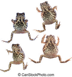 animal toad frog