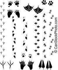 Animal Tracks 02