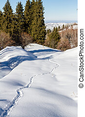 Animal tracks in a snowy forest