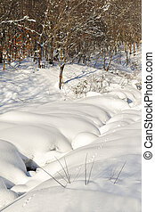 Animal tracks in snow beside stream