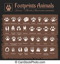 Animal Tracks - North American animals