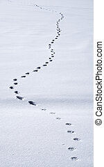Animal tracks prints in the snow