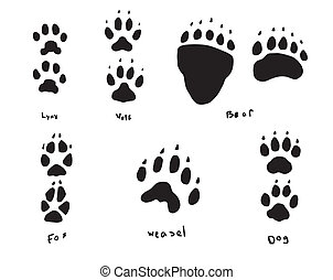animal tracks - this is a set of animal footprints