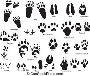 animal trails with title