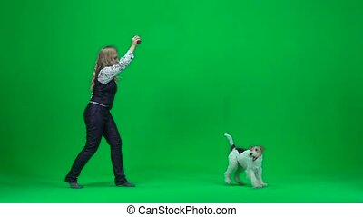 Animal trainer woman with a fox terrier. Green screen