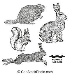 animal, vector, fondo., castor, ilustración, negro, blanco, style., conejo, mano, tinta, dibujado, grabado, bosque, bosquejo, liebre, squirrel.