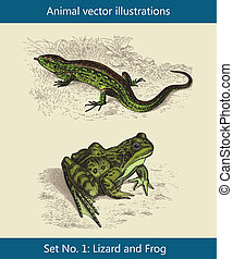 Animal vector illustrations,  Lizard and Frog