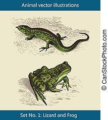 Animal vector illustrations,  Lizard and Frog      Animal vector illustrations,  Lizard and Frog